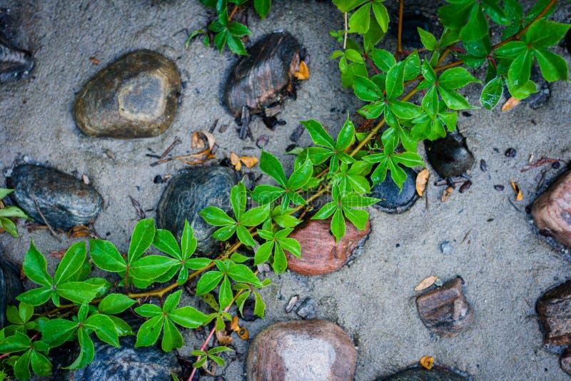 Groene en grijze achtergrond De aard, de steen en het zand en de druif doorbladeren royalty-vrije stock foto