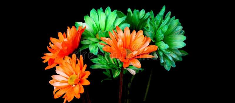 Groene en Oranje Daisy stock afbeeldingen