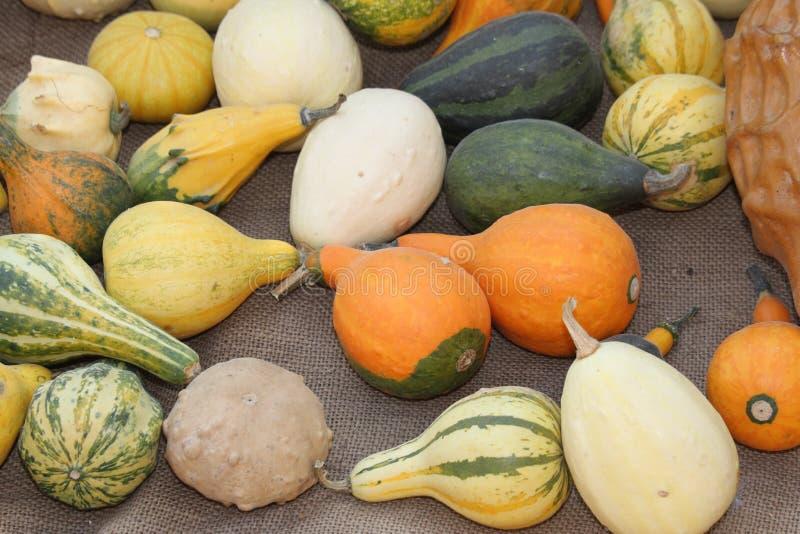 Groene en oranje pompoenen op verkoop bij de markt stock foto's