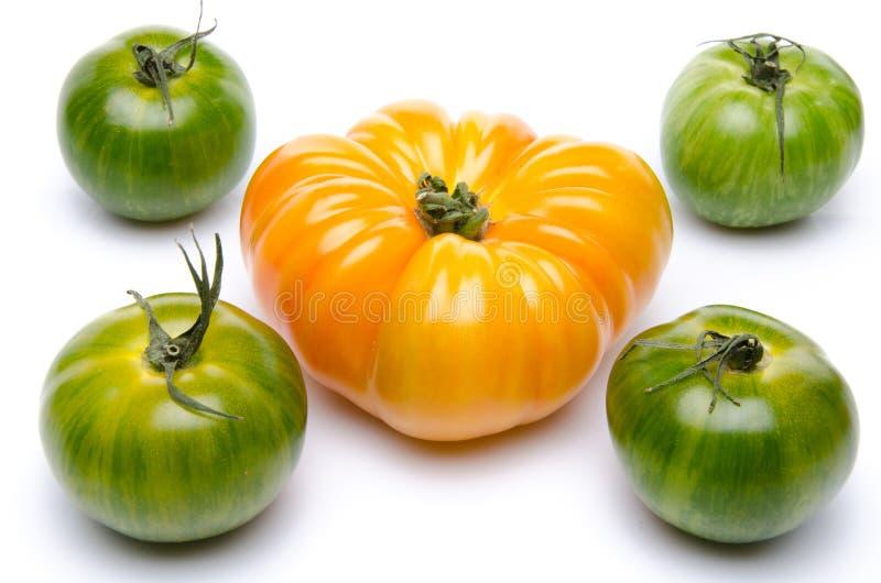 Groene en purpere tomaten royalty-vrije stock foto's