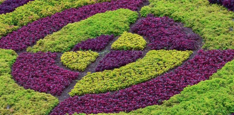 Groene en violette installaties in de lente op het eiland van Madera stock fotografie