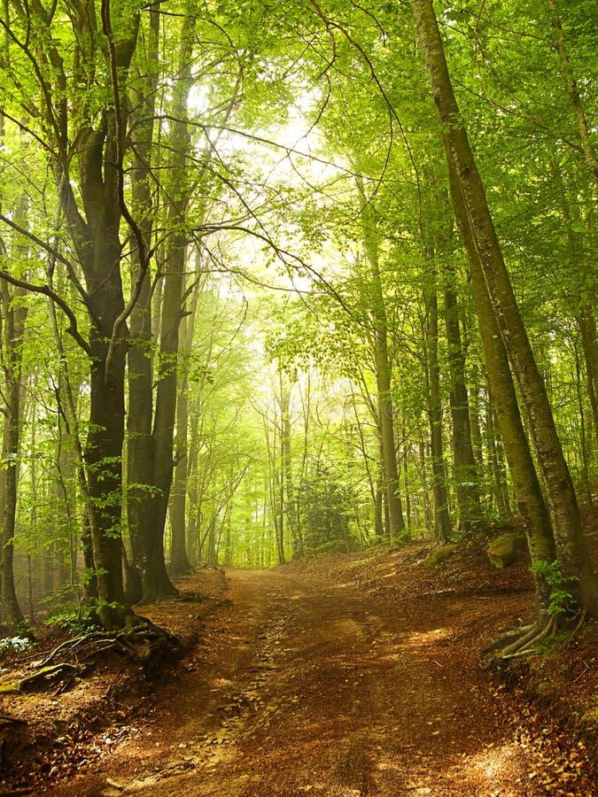 Groene en wilde aard, bos in Catalonië (Spanje) stock foto