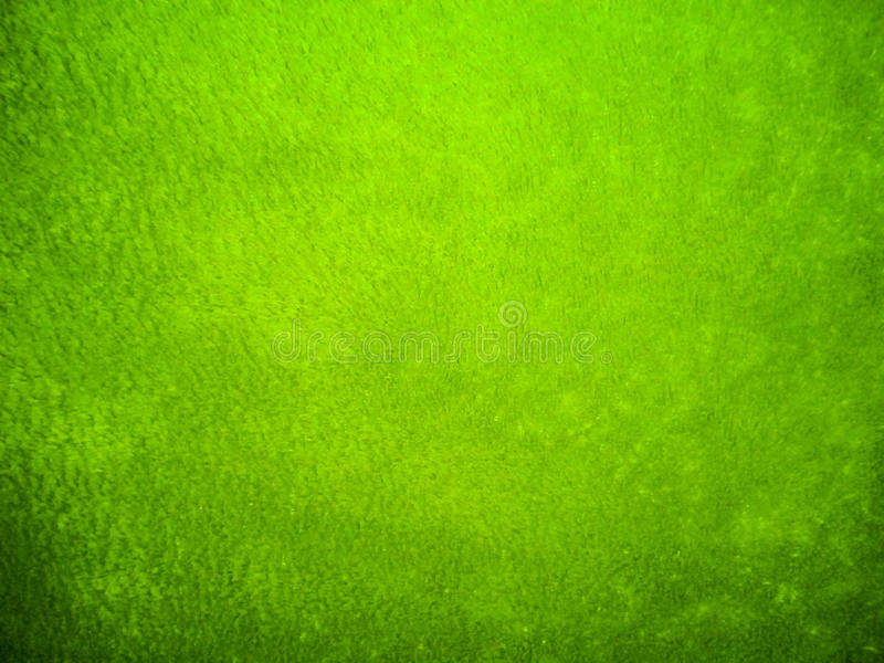 Groene Fluweelkleren royalty-vrije stock afbeelding