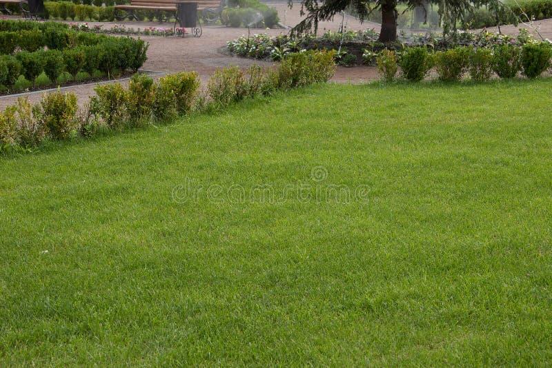 Groene gazon/achtergrond stock foto's
