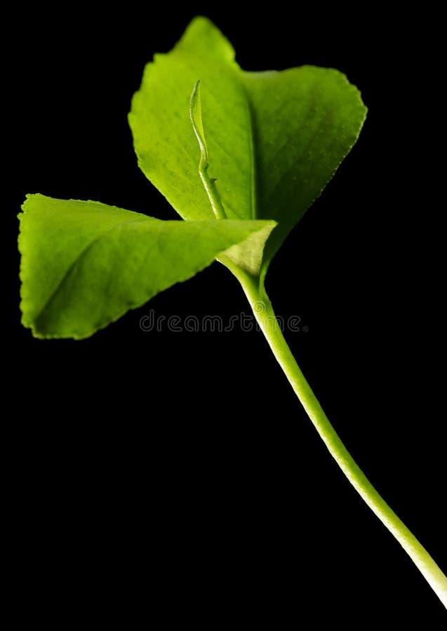 Groene geïsoleerdee spruit royalty-vrije stock foto's