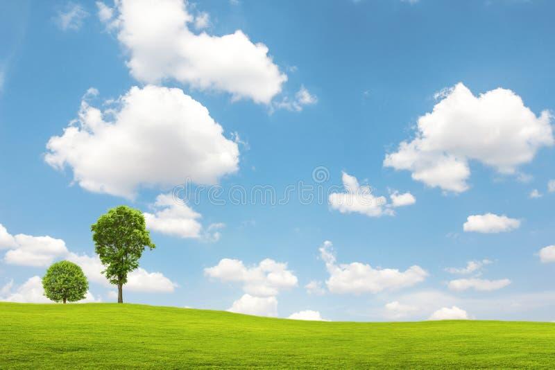 Groene gebied en boom met blauwe hemel stock afbeeldingen