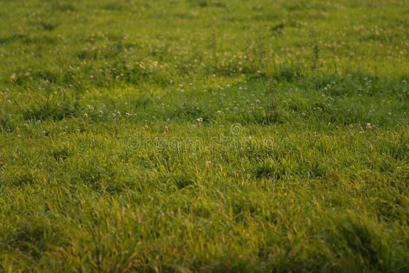 Download Groene gebieden stock foto. Afbeelding bestaande uit sereniteit - 280502