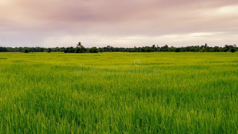 Groene gebieden en hemel royalty-vrije stock foto's