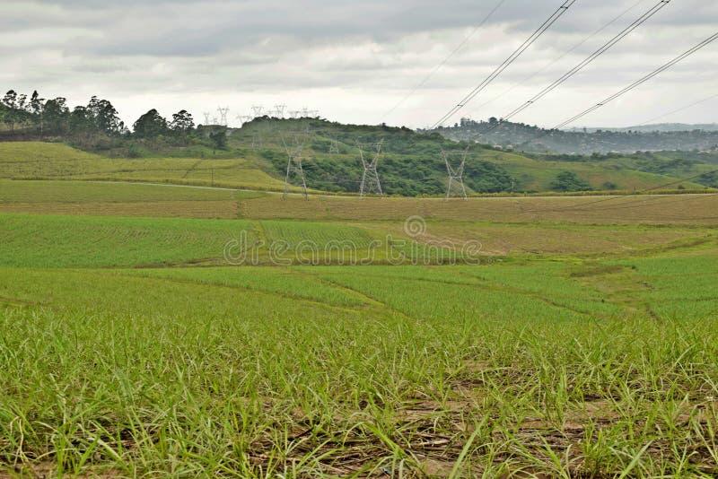 Groene gebieden en pylonen stock afbeeldingen