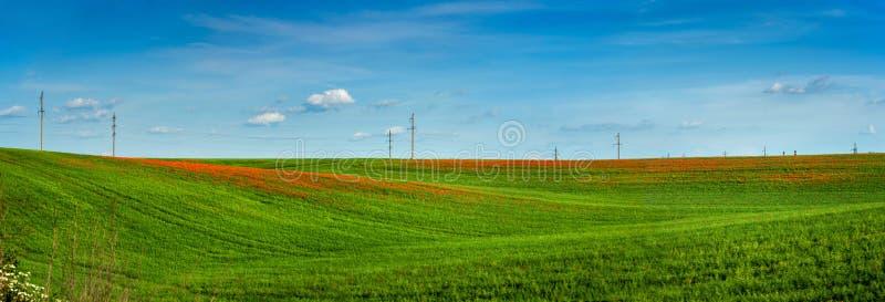 Groene gebieden met heldere bloeiende papavers in de Oekraïne, van Europa royalty-vrije stock afbeeldingen
