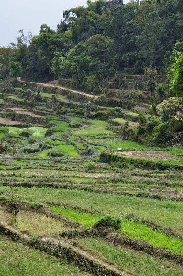 Groene gebieden Nepal stock fotografie
