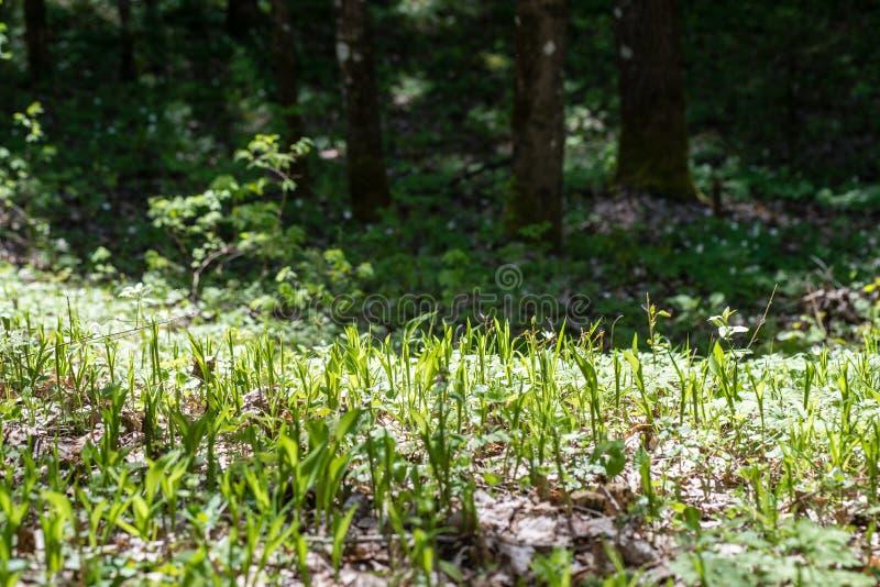 Download Groene Gebladerteachtergrond Stock Foto - Afbeelding bestaande uit summer, achtergrond: 54078354