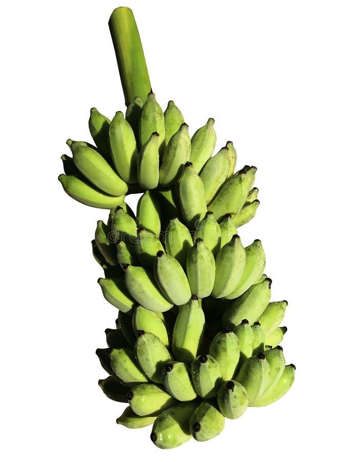 Groene gecultiveerde die banaanbos op witte achtergrond wordt geïsoleerd stock afbeeldingen