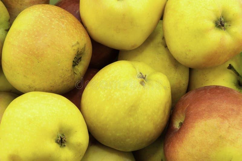 Groene, gele en rode appelen stock afbeelding