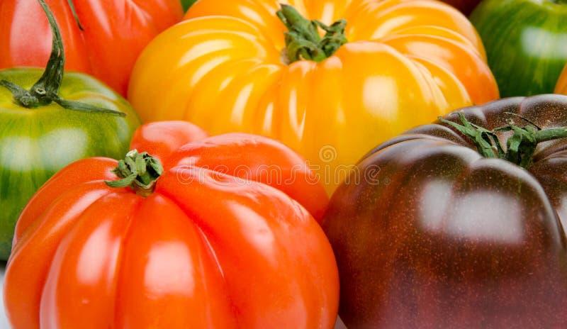 Groene, gele, oranje en purpere tomaten stock fotografie