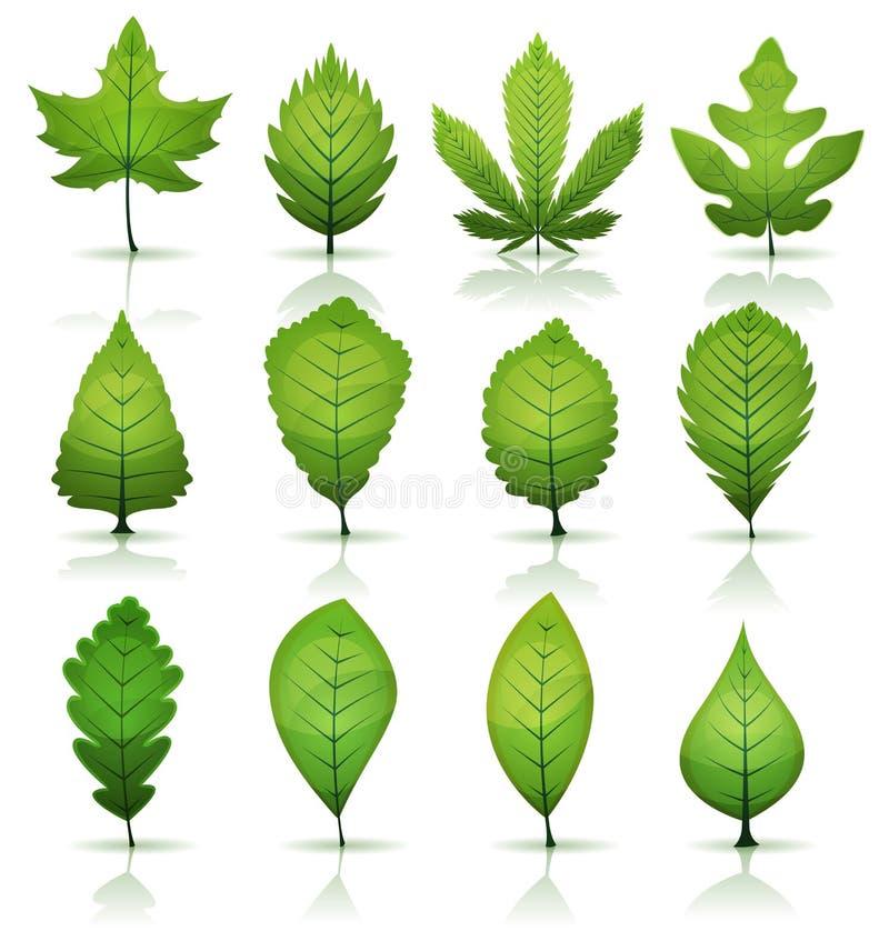 Groene geplaatste bladeren stock illustratie