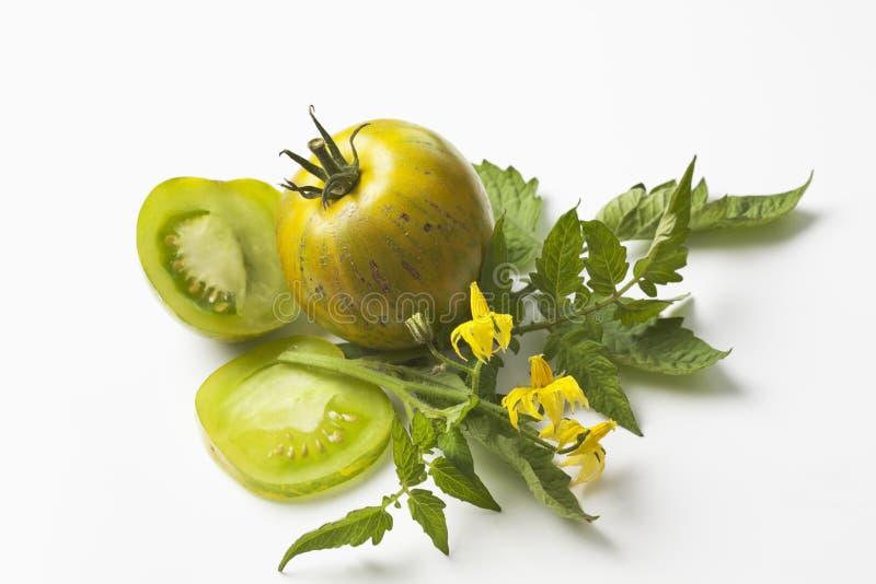 Groene gestreepte tomaten en bloem op witte achtergrond stock afbeelding