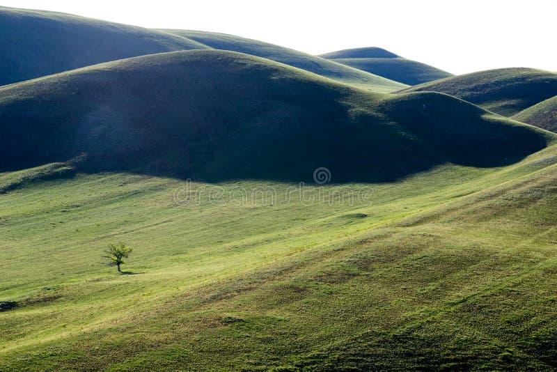 Groene, geweven heuvels stock afbeeldingen
