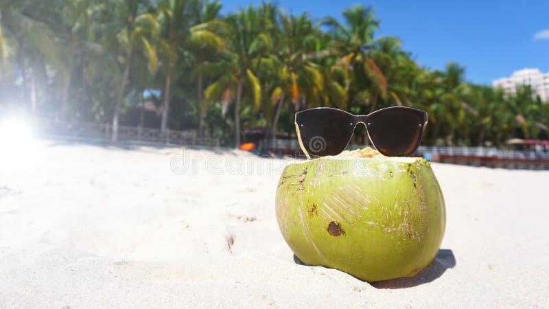 Groene grappige kokosnoot in zonglazen op wit zandig strand, het concept van de de zomerreis stock fotografie