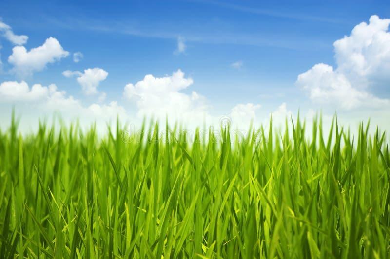 Groene gras en hemel royalty-vrije stock afbeeldingen