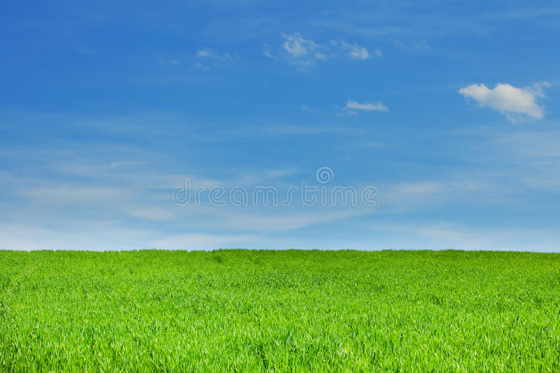 Groene Gras en Hemel stock afbeelding