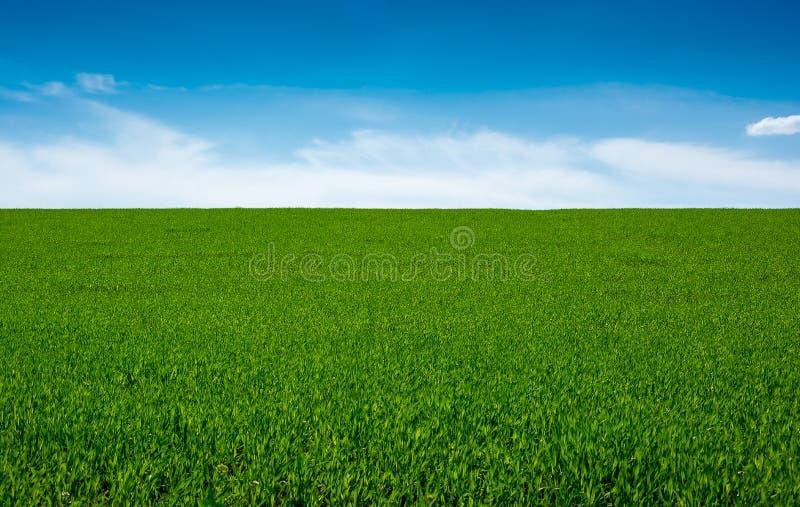 Groene gras en hemel, achtergrond stock fotografie