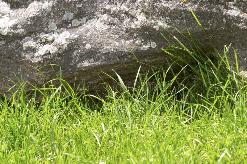 Groene gras en steen royalty-vrije stock afbeeldingen