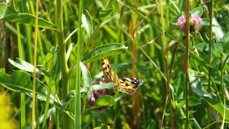 Groene gras en vlinder royalty-vrije stock afbeelding
