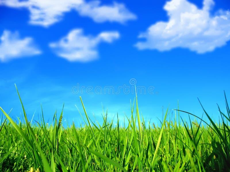 Groene gras en wolken royalty-vrije stock foto