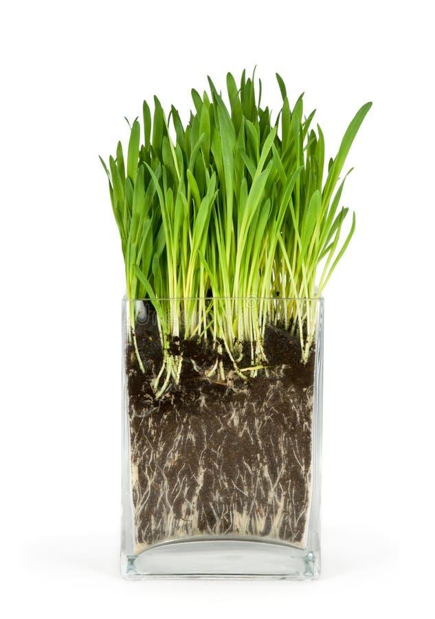 Groene gras en wortels stock foto's
