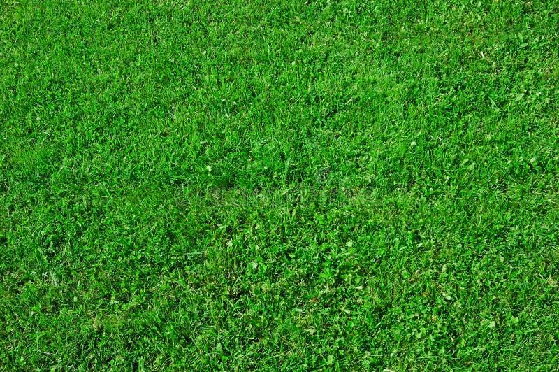 Groene grasachtergrond stock fotografie