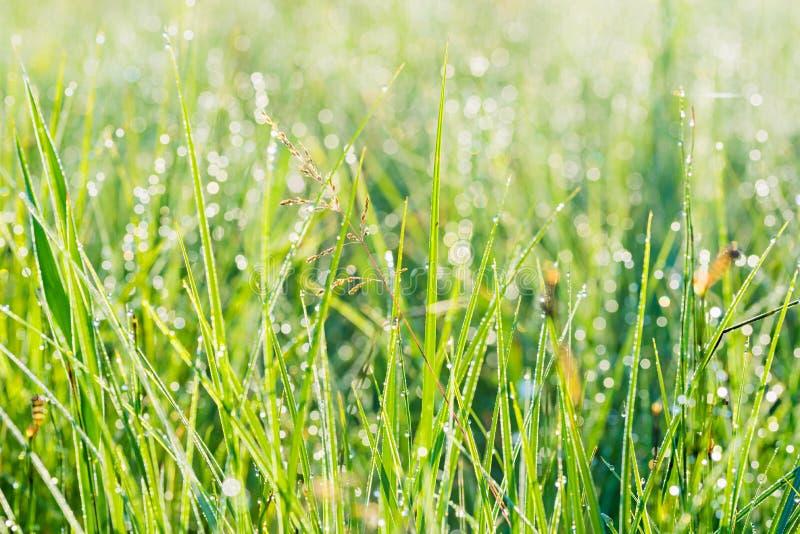 Groene grasachtergrond met lensgloed en dauwdalingen royalty-vrije stock afbeelding