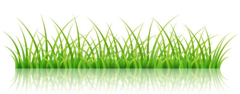 Groene grasbanner, op wit royalty-vrije illustratie