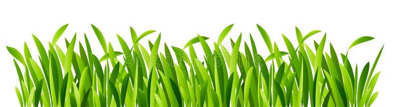 Groene grasclose-up stock illustratie
