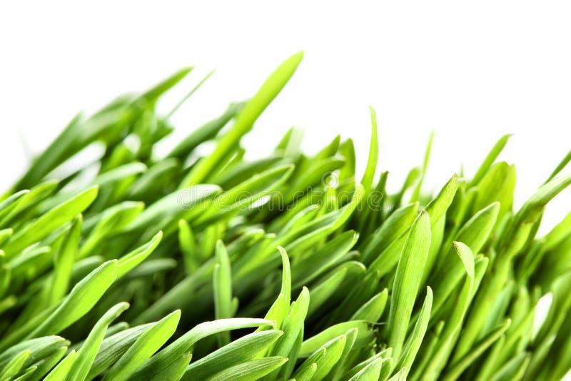 Groene grasmacro royalty-vrije stock afbeelding