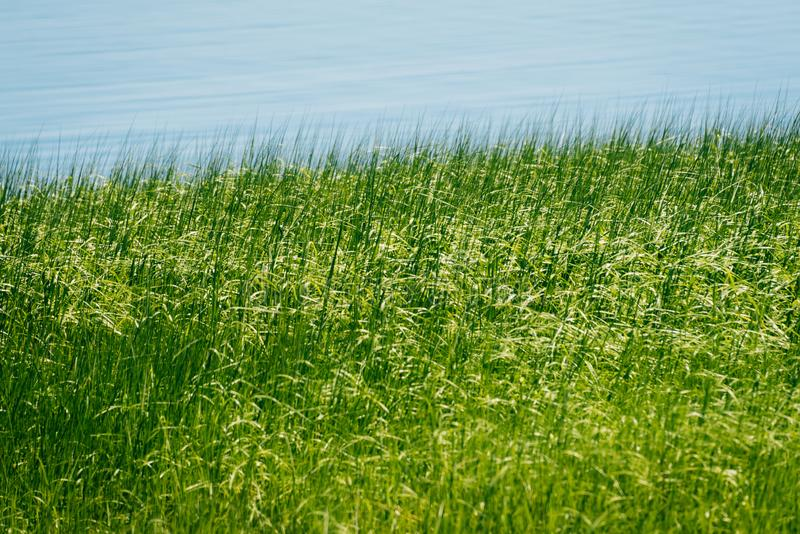 Groene grassen langs water in Newburyport, Massachusetts stock foto's