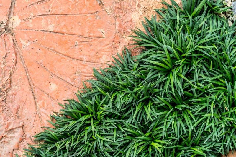 Groene grastextuur stock afbeeldingen