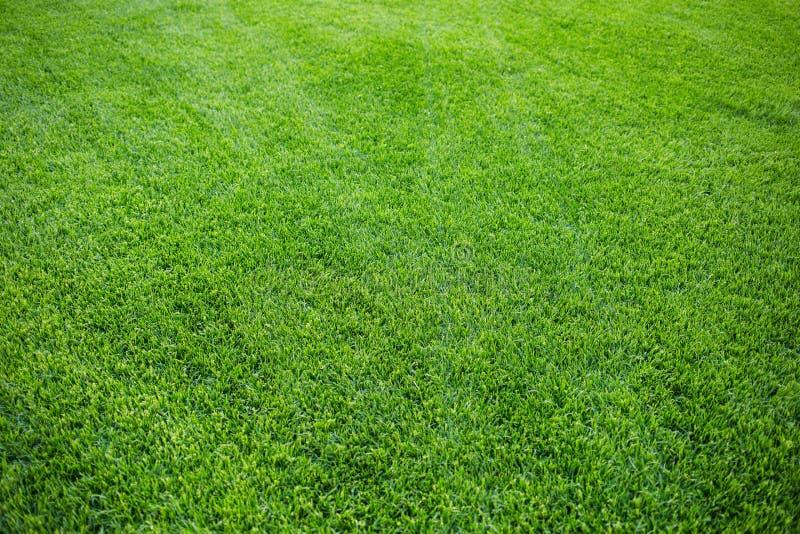Groene grastextuur als achtergrond vers helder sappig gemaaid gazon Hoogste mening royalty-vrije stock foto