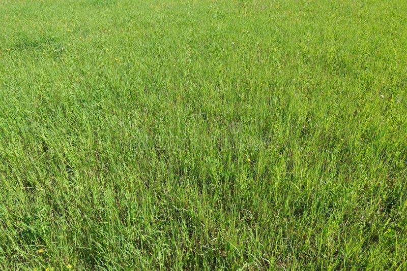 Groene grastextuur van een gebied Natuurlijke groene Achtergrond royalty-vrije stock foto