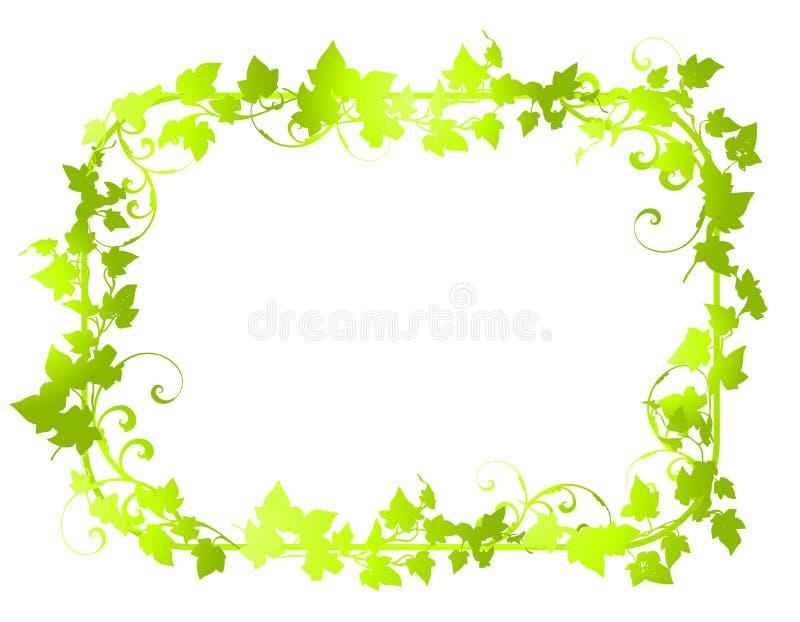 Groene Grenzen 2 van het Frame van het Blad van de Wijnstok vector illustratie