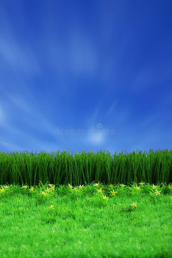 Groene gress en blauwe hemel stock foto's