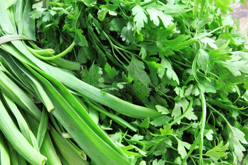 Groene groentendille en peterselie stock fotografie