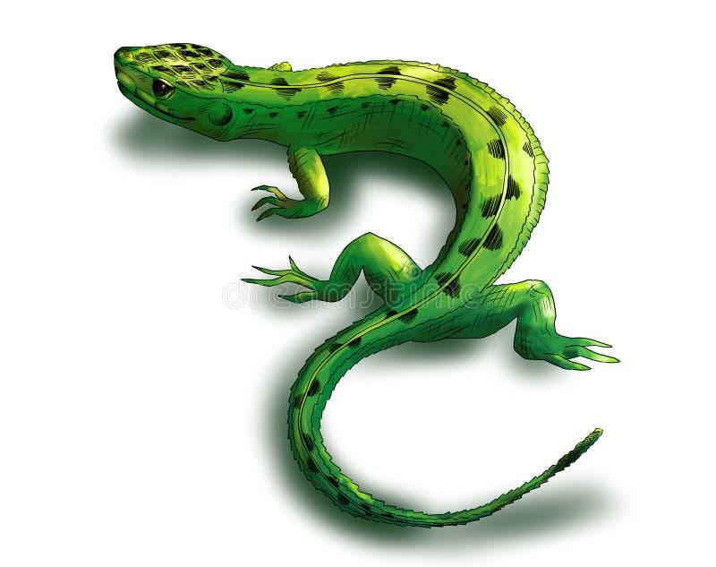 Groene hagedis vector illustratie