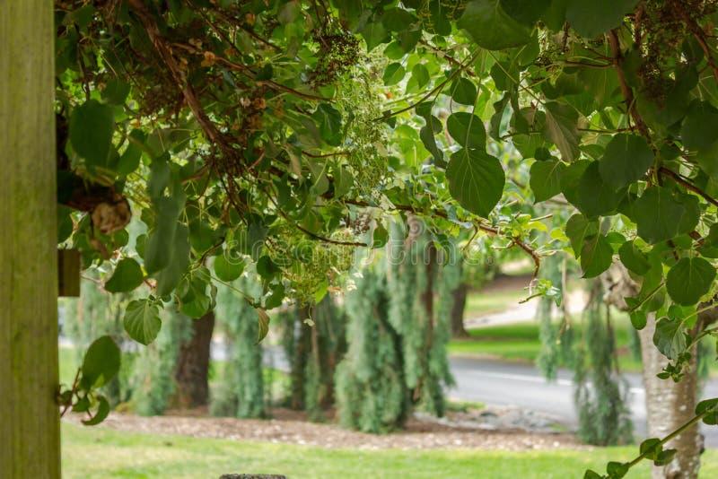 groene hangende tuininstallaties en bladeren die in de zomer draperen royalty-vrije stock afbeeldingen