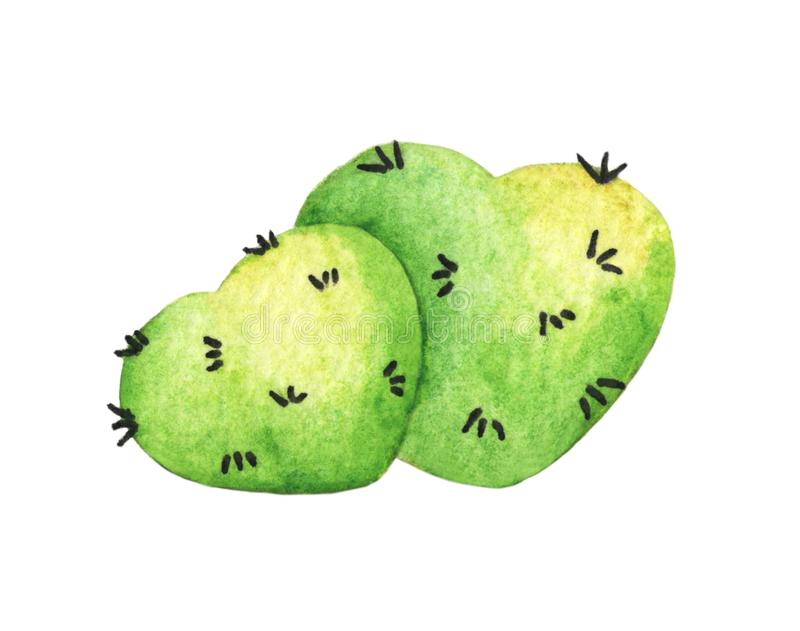 Groene hartcactus De illustratie van de waterverf vector illustratie