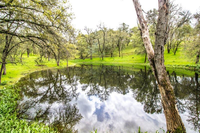 Groene Helling van Bomen die van de Vijver van het Land nadenken stock foto's