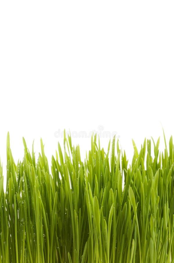 Groene het grasachtergrond van de lente. stock foto's