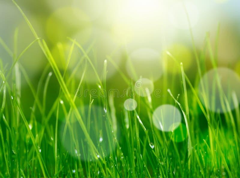 Groene het grasachtergrond van het onduidelijke beeld royalty-vrije stock foto