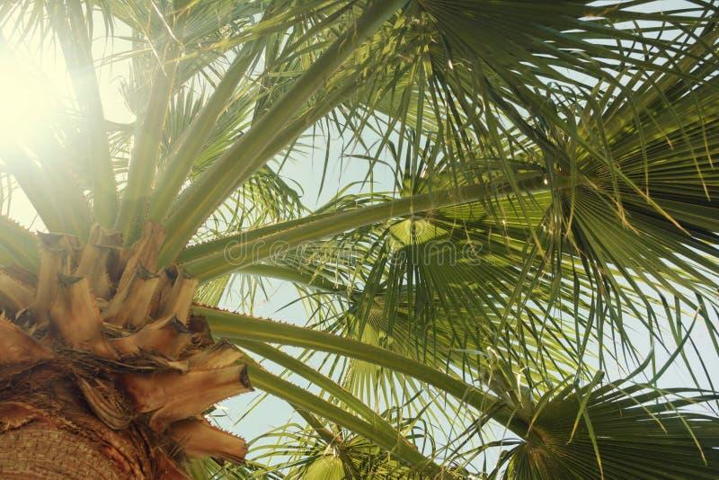 Groene het uitspreiden zich palmtakken Mooie de zomerachtergrond Foto met gloed van de zon royalty-vrije stock foto
