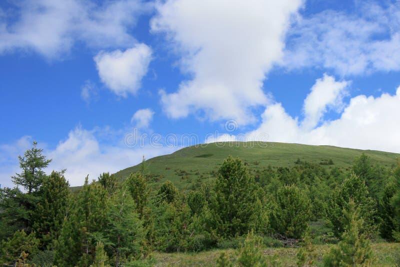 Groene heuvel royalty-vrije stock foto's